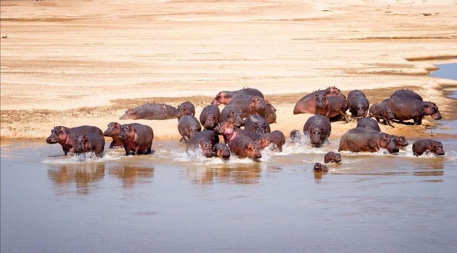 Luangwa National Park, Zambia
