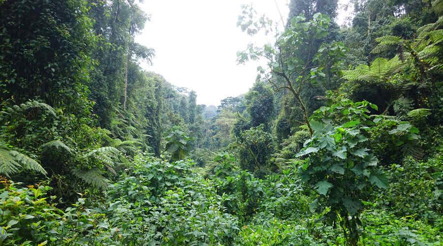Rain forest Uganda