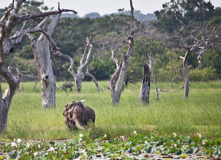 Safari drive in Yala National Park
