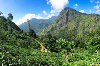 Sri Lanka Hill Country - Ella