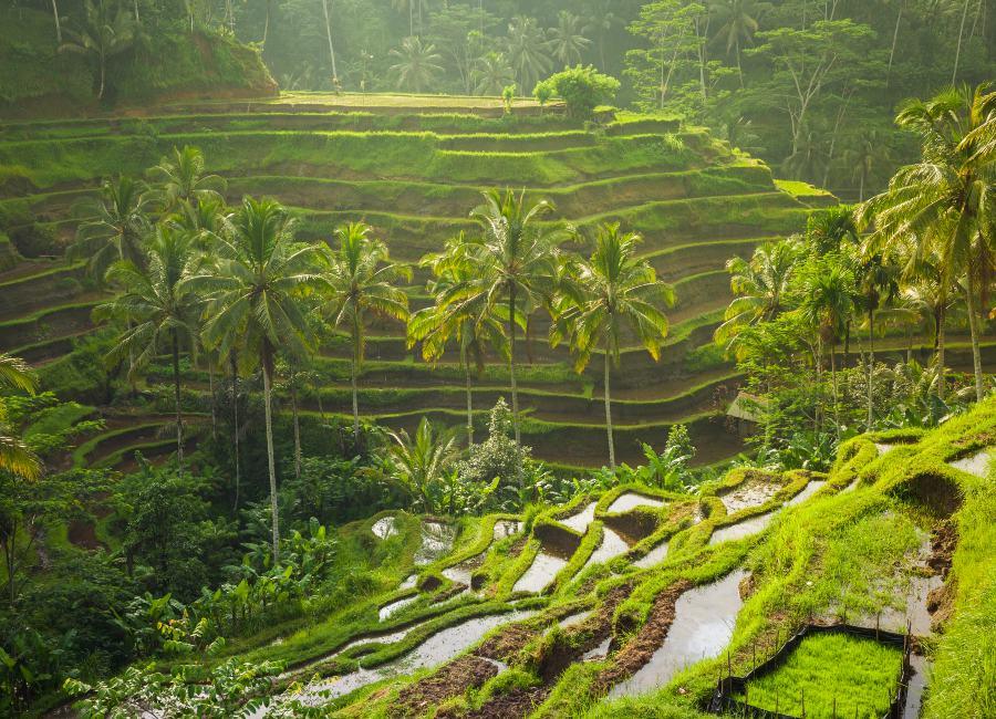 Tegalallang Rice Terraces, Ubud, Bali