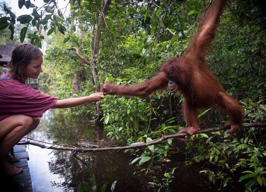 Orang-utan encounter in Tanjung Puting National Park, Kalimantan