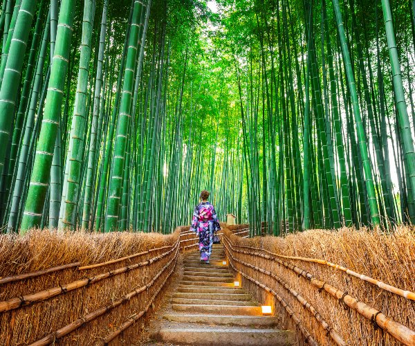 Arashiyama bamboo forest, Japan