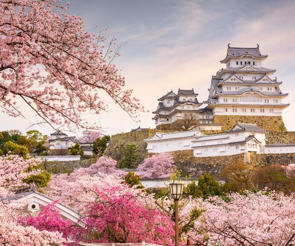 Cherry Blossom at Himeji Castle, Japan