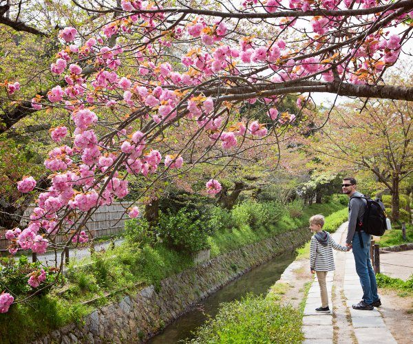 Cherry blossoms in a Tokyo Park