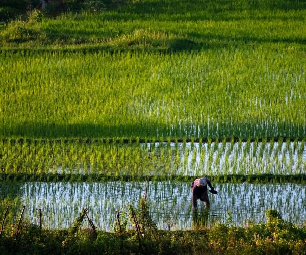 Farmer working in Sidemen, Bali