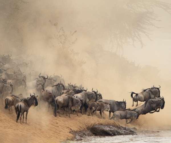 Great Migration, Tanzania