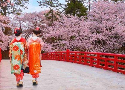 Geisha in Kyoto during cherry blossom season