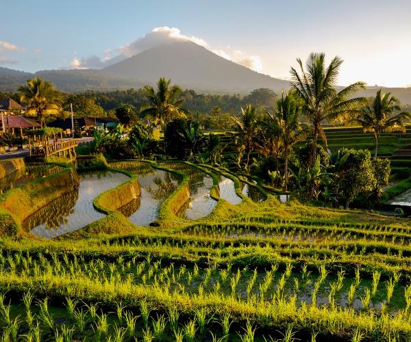 Rice terraces in Karangasem, Bali