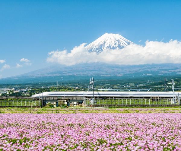 Shinkansen passing Mt Fuji in Cherry Blossom season