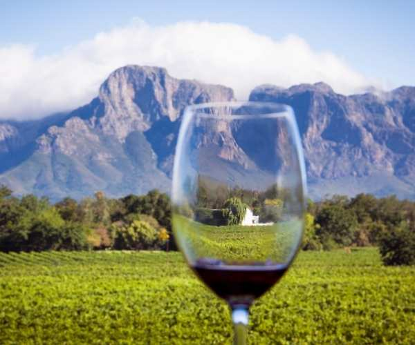 Wine, South Africa